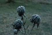 Dismay Prints - Shadowy Frozen Pods from the Darkside Print by Douglas Barnett