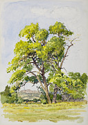 Tree Roots Paintings - Shady Oak Tree by James Robert MacMillan