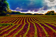 Agriculture Digital Art - Shagadelic Crop Lines by Bill Tiepelman