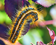 Trippy Photos - Shagerpillar by Bill Tiepelman