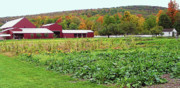 Harvest Time Prints - Shaker Farm in Autumn 1 Print by Steve Ohlsen