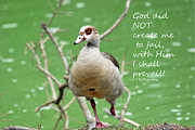 Outlook Prints - Shall Not Fail Print by Teresa Blanton