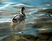 Ducks Pastels - Shallow Reflections by David Vincenzi