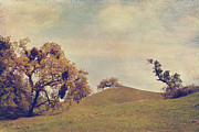 Textured Landscape Prints - Sharing the Attention Print by Laurie Search