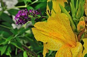 Canna Photos - Sharing the Spotlight by Gene Sherrill
