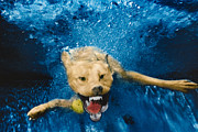 Diving Dog - Shark Attack by Jill Reger