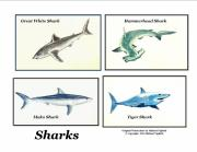 Shark Drawings - Sharks Collage by Michael Vigliotti