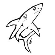 Shark Drawings - Sharky Staredown by Stef Schultz Sorry Little Sharky