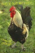 Roosters Photos - Sharp Feet by Norman  Andrus