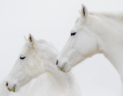 Horses Prints - She Dreamed of White Horses Print by Ron  McGinnis