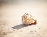 Seashell Art Prints - She Sells Sea Shells Print by Lisa Russo