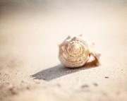 She Sells Sea Shells Print by Lisa Russo
