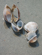 Sea Shell Art Metal Prints - She Sells Sea Shells Metal Print by Suzanne Gaff