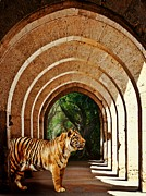 Tiger Digital Art Prints - She Waits.... Print by Sharon Lisa Clarke