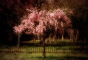 Cherry Blossom Trees Prints - She Weeps - Ocean County Park Print by Angie McKenzie