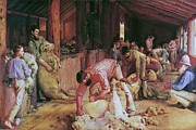 Sheep Prints Posters - Shearing The Rams Poster by Pg Reproductions