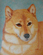 Puppies Drawings Framed Prints - Sheba Inu  Framed Print by Karen Curley