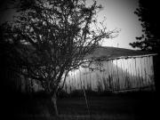 Shed  And Tree Print by Michael L Kimble