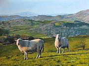 North Wales Paintings - Sheep at Rhug by Harry Robertson