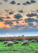 Hdr Pastels Metal Prints - Sheep At Sunset Metal Print by Jackie Novak