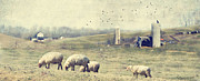 Sheep Prints Posters - Sheep Farm Poster by Kathy Jennings