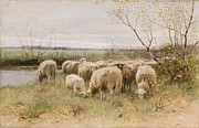 Pastoral Landscape Framed Prints - Sheep Framed Print by Francois Pieter ter Meulen