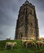 Tor Framed Prints - Sheep grazing on Glastonbury Tor Framed Print by Neil Howard