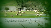 Flooding Photos - Sheep Grazing Scripture Art by Cindy Wright