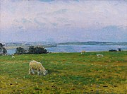 Sheep Paintings - Sheep Grazing by Viggo Johansen