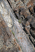 Rocky Cliff Posters - Sheep On A Cliff Poster by David Kleinsasser