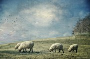 Farm Landscapes Framed Prints - Sheep On The Hill Framed Print by Kathy Jennings