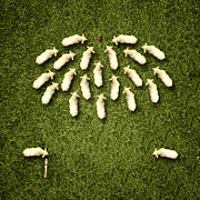 Animal Games Prints - Sheep Playing Cricket Print by Michael  Murray