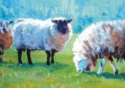 Flock Of Sheep Painting Posters - Sheep standing in bright sun light Poster by Mike Jory