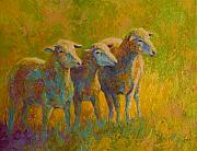 Llama Metal Prints - Sheep Trio Metal Print by Marion Rose