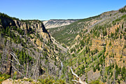 Yellowstone Photos - Sheepeater Canyon by Greg Norrell