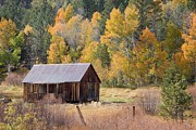 C Casch - Sheepherders Cabin In...