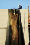Frontal Nude Posters - Sheer Nude Poster by Harry Spitz