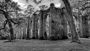 Old Sheldon Church Framed Prints - Sheldon Church Ruins Framed Print by Drew Castelhano
