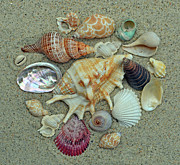 Sandi OReilly - Shell Collection 2