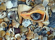 Sandi OReilly - Shell Collection