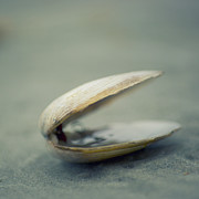 Beach Photography Art - Shell by Jill Ferry Photography