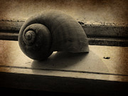 Sill Photo Originals - Shell on the Sill by Jessica Grandall