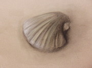 Beach Scenery Drawings Prints - Shell Print by Safa Khawaja