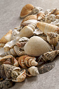 Large Group Of Objects Posters - Shellfish shells Poster by Bernard Jaubert
