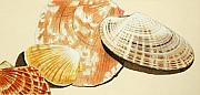 Tan Drawings Posters - Shells 1 Poster by Glenda Zuckerman