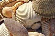 Textures Digital Art Posters - Shells 1 Poster by Mike McGlothlen