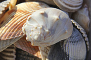 Textures Digital Art Posters - Shells 2 Poster by Mike McGlothlen