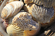 Sea Shells Digital Art Framed Prints - Shells 3 Framed Print by Mike McGlothlen