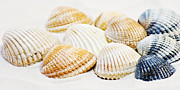 Mussels Posters - Shells Poster by Angela Doelling AD DESIGN Photo and PhotoArt