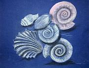 Sea Shells Painting Posters - Shells Poster by Barbara Teller